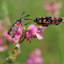 insetti Parco d'Abruzzo