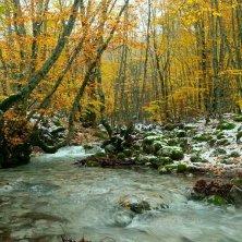 ruscello in autunno
