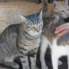 gatti-al-monastero