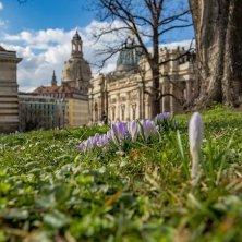 primavera a Dresda