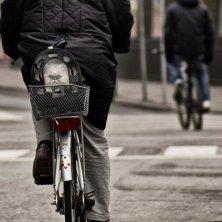 gatto in bici