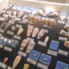 collezione conchiglie museo marittimo