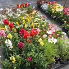 fiori al mercato