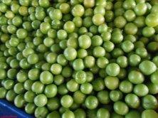 susine verdi turche