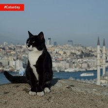 Istanbul felina