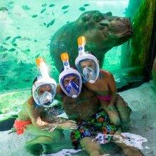 bagno con ippopotami