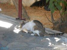 croccantini e gatto a Bodrum