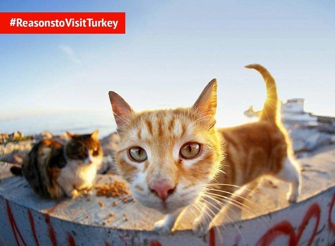 Turchia E Gatti Un Grande Amore Senza Fine Latitudinex