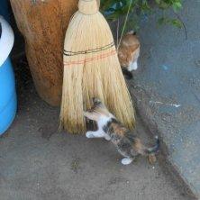 gattini giocano con la scopa