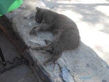 gatto al museo Marittimo Bodrum