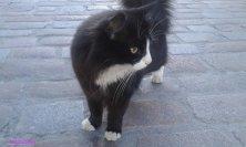 gatto alla porta Viru