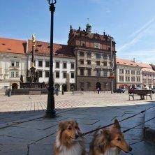 piazza Municipio Pilsen