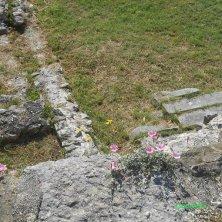 fiori tra le rovine