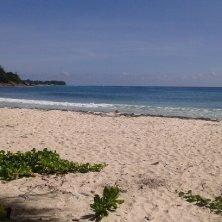 spiaggia dove nidificano le tartarughe