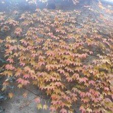 foglie d'autunno al giardino
