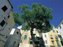 Sanremo vecchia
