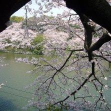 Tokyo hanami_fioritura