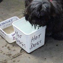 ciotole per i cani