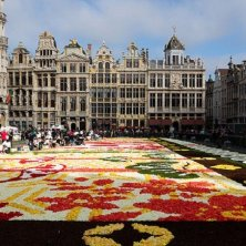 Bruxelles infiorata