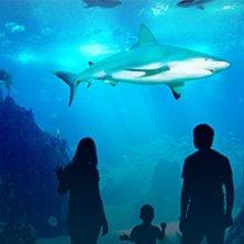 incontro con gli squali