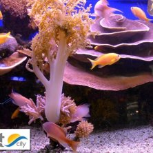 pesci Mar Rosso