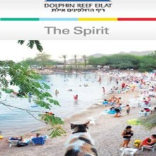 spiaggia dei delfini