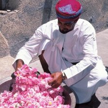 Rose Water preparation - An Omani man holding petals of roses
