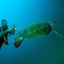 plongeur et tortue verte