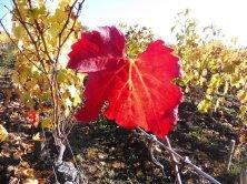 autunno a Saint Emilion
