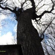 albero nel vecchio cimitero