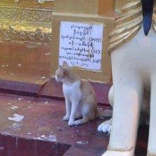 gatto alla pagoda