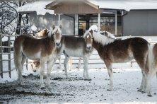 FormatFactoryKufsteinerland Winter_Ebbs_(c) VAN MEY (13)