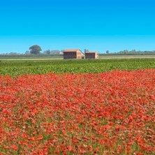 Polesine-paesaggio