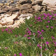 fiori e mare