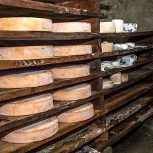 fontina e formaggi in latteria