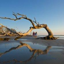 Driftwood Beach Driftwood Beach - Jekyll Island