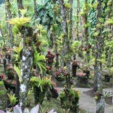 all'interno del Jardin de Balata