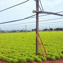coltivazioni Polignano