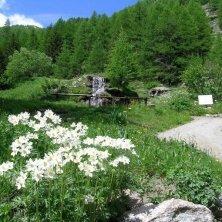 fiori e cascate Cogne
