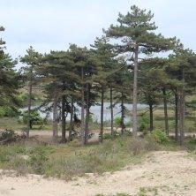 parco naturale Zandvoort