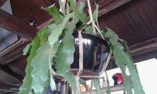 pianta all'interno del cottage