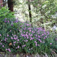fiori intorno al lago