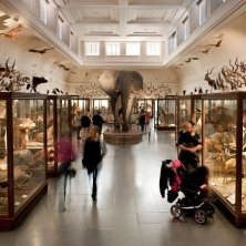 Museo Storia Naturale Goteborg