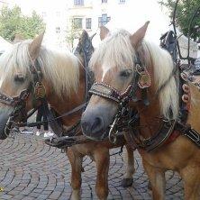 cavalli con carrozza in piazza a Bressanone