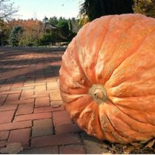 zucca per Halloween in Massachusetts