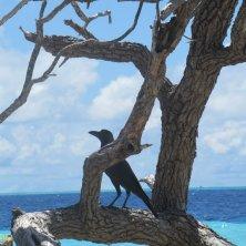 corvo tra i rami