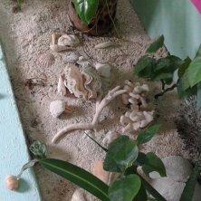 dettaglio giardinetto interno guest house