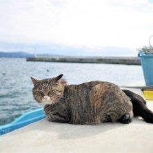 gatto al porto