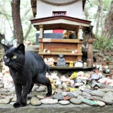 isola dei gatti giapponesi