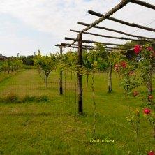 Albarella_piante da frutto_ Progetto Immersi nella natura_phVGaluppo